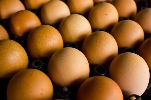 Ägg från utegående höns ska finnas i butik igen till påsk efter fågelinfluensan.