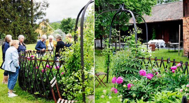 """En grupp damer som just har ätit lunch hos Maria får en visning av hennes nya """"trädgård för vila"""" med pioner och en porlande fontän."""