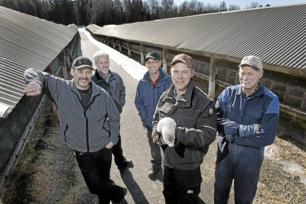 Fem bröder Olsson driver Håkans Mink AB med stor framgång. Från vänster Max, Dan, Gert, Niklas och Stellan.