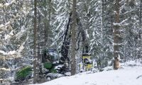 SCA hittade 11 miljoner kubikmeter skog