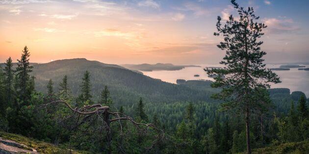 I dag är det Internationella Skogsdagen – fira med ett quiz!
