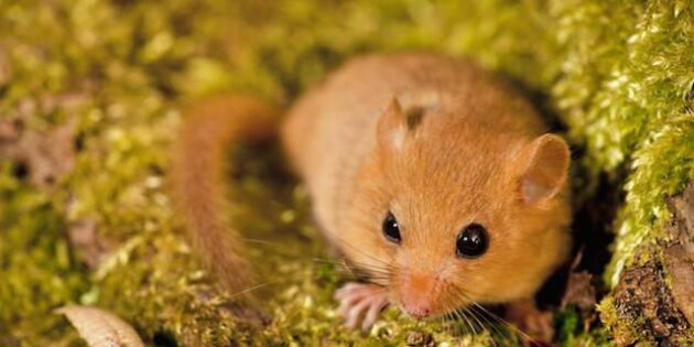 Nu vaknar Sveriges sötaste djur