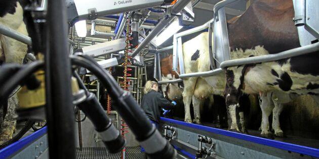 Framtiden för mjölk finns i u-länderna