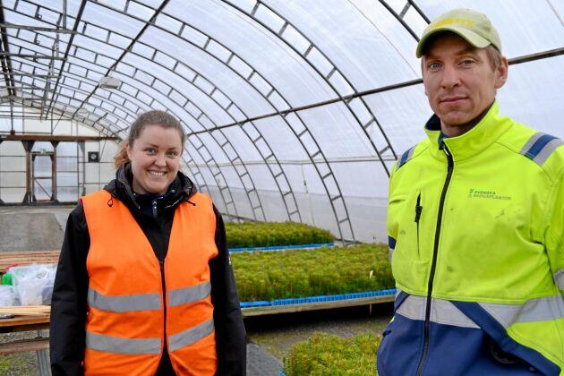 Rebecca Larsson, industridoktorand på SLU, forskar på alternativ till kemiska fungicider hos Svenska Skogsplantor. Här på Lugnets plantskola i Bålsta med odlingsledare Martin Larsson.