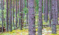 Låt inte EU sätta käppar i hjulet för svenskt skogsbruk