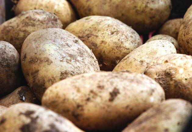 Den låga lönsamheten i potatisodlingen i kombination med en åldrande odlarkår leder också till att viljan att investera i nya maskiner med flera års avskrivningstid är begränsad.