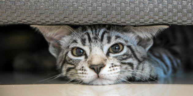 5 tecken på att din katt är deppig