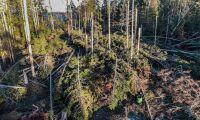 Mellanskog: Vi hinner inte få ut träden