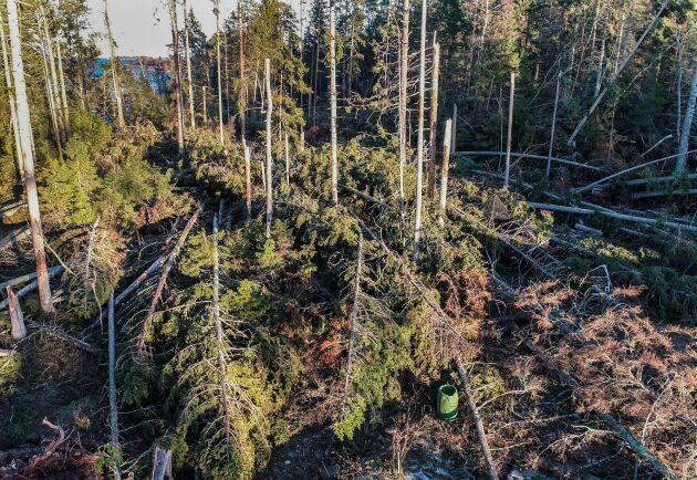 Det stormfällda virket måste ut ur skogen senast på måndag, annars hotar böter för skogsägaren. Arkivbild.