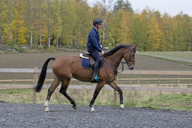 I sadeln hela dagen. Fredrik Lind rider omkring 15 hästar om dagen.