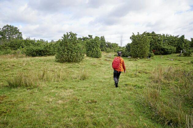 Helena vandrar i det småbrutna landskapet med skog, betesmarker och ekdungar kring Skäpperöd i Hörby kommun.