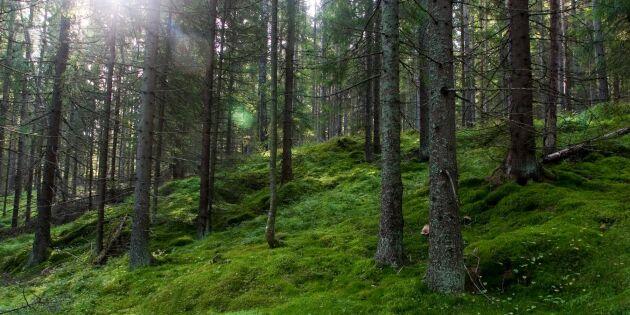 Barrskogen kan kyla klimatet