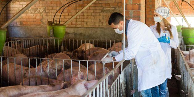 EU stänger gränskontroller - ökad djursmitta