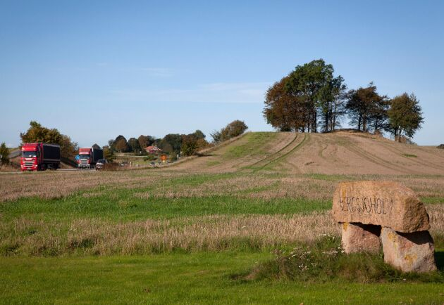 Bergsjöholm jobbar med mellangrödor, i år har ett gräs såtts i vetestubben som kan bidra till att locka till sig vilt.