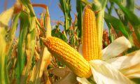 Globala livsmedelspriser sjunker stadigt
