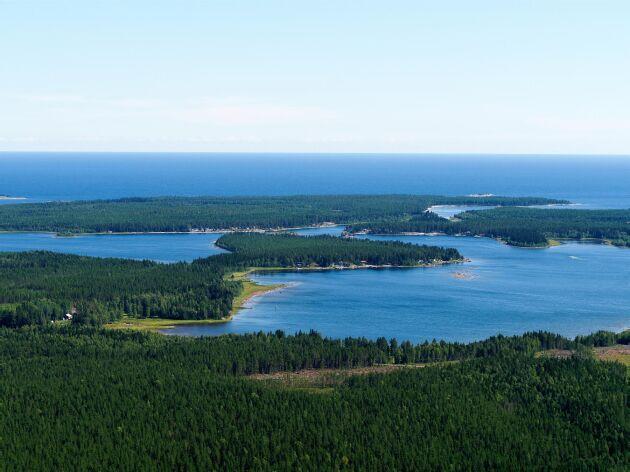 Havsvik i Bottenviken söder om Furuögrund. I förgrunden avverkad skog med sparad kantzon närmast vattenbrynet (arkivbild).