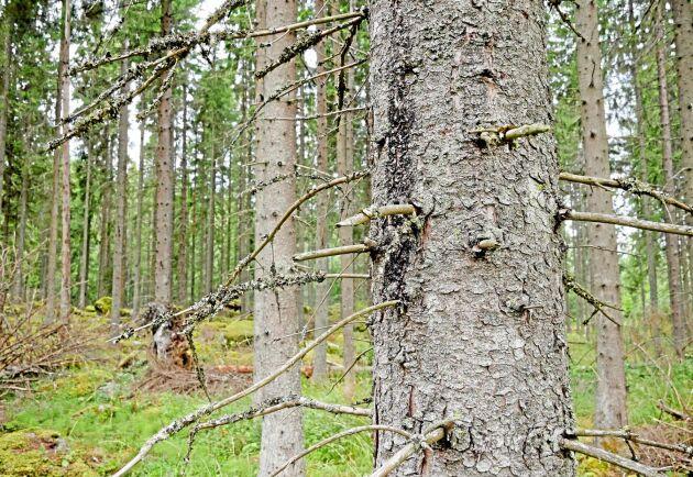 Skogsstyrelsen ansåg att avverkningsstoppet skulle gälla samtliga 10 hektar som avverkningsanmälts.