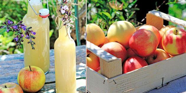 Kalasgod äppeldricka – så enkelt gör du den själv