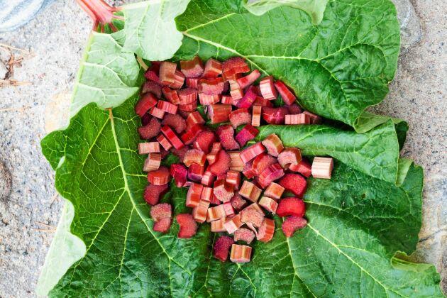 I gårdsbutiken säljs även plantor. Sorten Elmsefur, röd helt igenom ör populär och god i paj, sylt och saft.