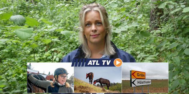 ATL TV: Starkare hästar på naturbete