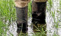 Varning för mer regn i södra Sverige