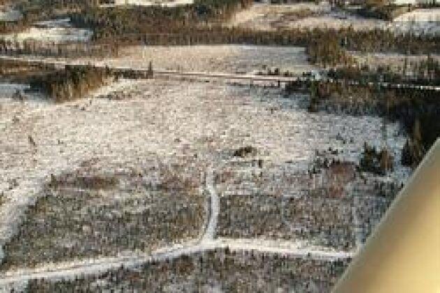 Barr i topp. Granen lär fortsätta att att dominera i det område som för sex år sedan ödelades av stormen Gudrun. Foto: Torbjörn Esping