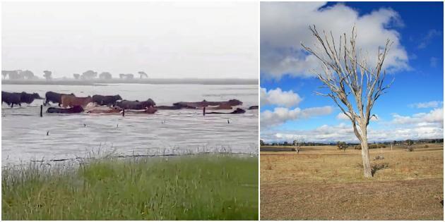 Halv miljon djur döda efter översvämningar