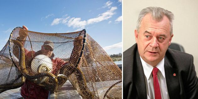 Ny överenskommelse: Ålfiskestopp i Östersjön
