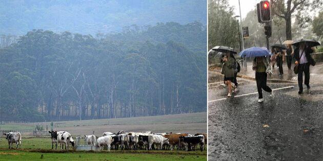 Regn dämpar bränderna i Australien