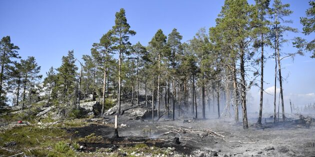 Besvärlig skogsbrand härjar i Örnsköldsvik