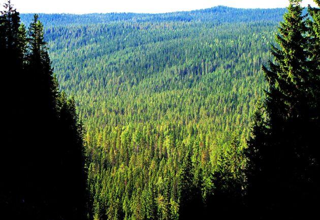 En gemensam databas i branschen skulle kunna ge bättre prisstatistik på skog.