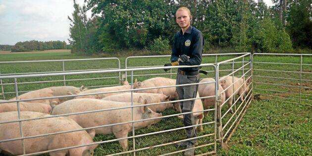 Vägen till framgång –grishus på släp