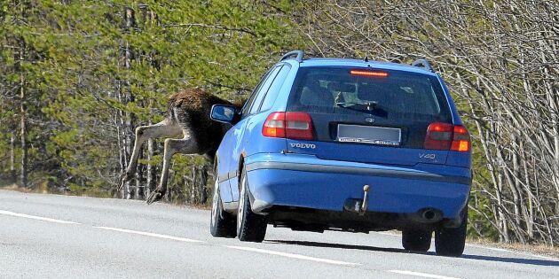 Därför ska du köra extra lugnt i trafiken just nu