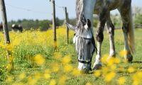 Betande ger näringsrikare gräs