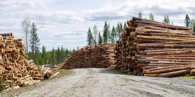 Skogsbolagen tror på högre virkespriser