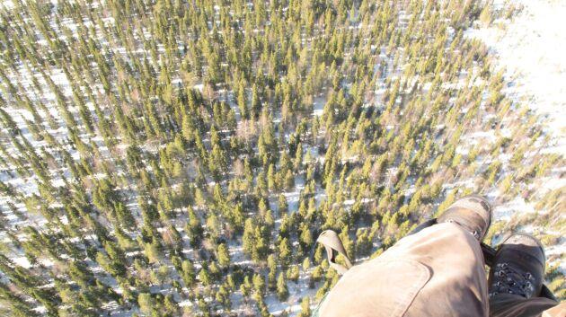 Från luften kan Håkan Önneholm fotografera och få en bra överblick över skogen.