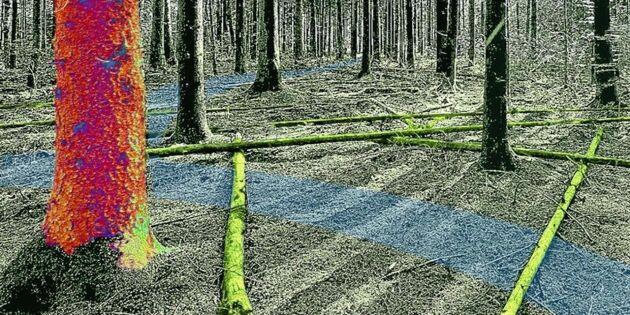 Miljonregn över skogsforskning