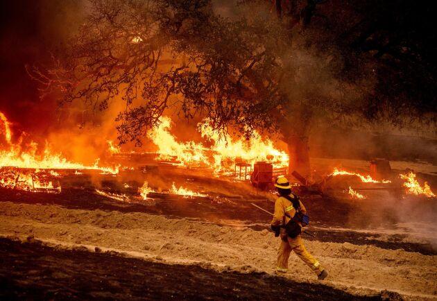 En brandman bekämpar lågorna i vinregionen i närheten av Calistoga i Kalifornien. Bilden är från den 1 oktober.