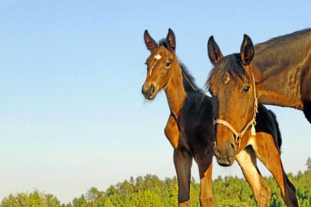 Veterinärvården av hästar har blivit dyrare efter riskkapitalets intåg i branschen.