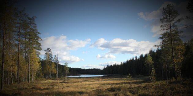 Nu ska viltförvaltningen vid norska gränsen samordnas