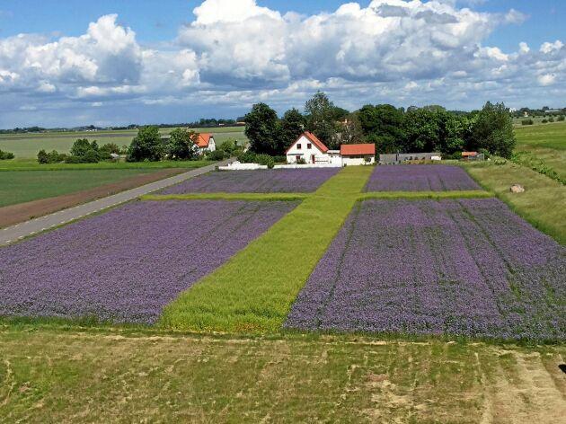 Första konstverket som Per Larsson gjorde 2016 var en svensk flagga.