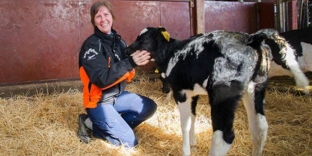 Rätt foder och ett tränat öga ger kor i toppklass