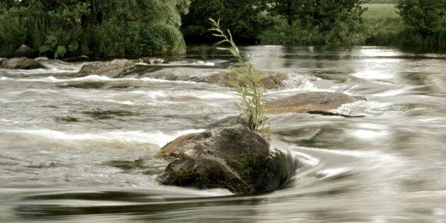 SMHI varnar för höga flöden – lantbrukare oroliga
