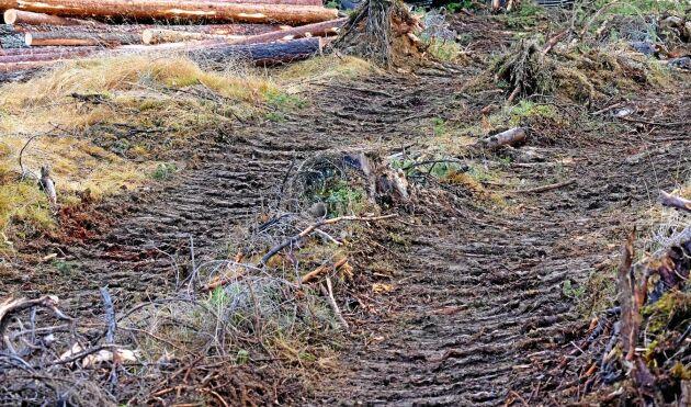Hur man motverkar markskador inom skogsbruk är ett område där Skogsstyrelsen nu stöttar med bidrag för kompetensutveckling.