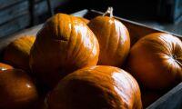 Fler svenska pumpor – tack vare halloween