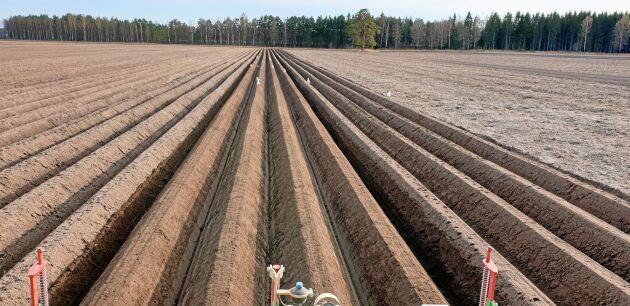 Fräsning och kupformning inför potatissättning i Värmland.