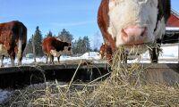 Ministrar vill ha mer EU-lagstiftning för djurvälfärd