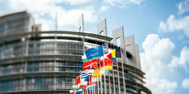 EU-parlamentet närmare nordisk skogslinje