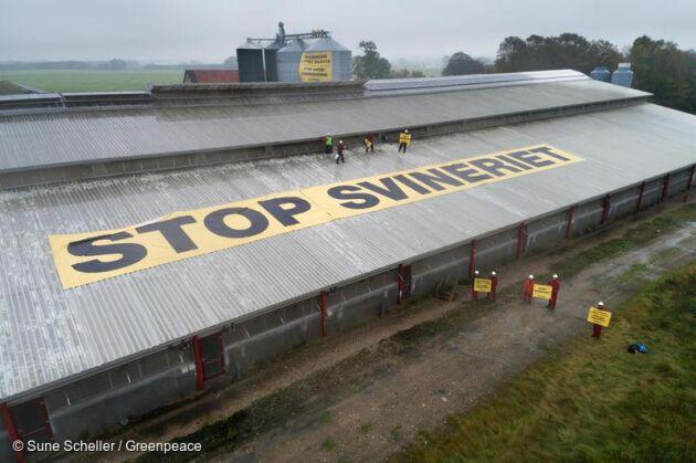 Med stora banderoller uppe på stalltaket och på fodersilorna protesterade Greenpeace-aktivister utan tillstånd mot den danska grisproduktionen.