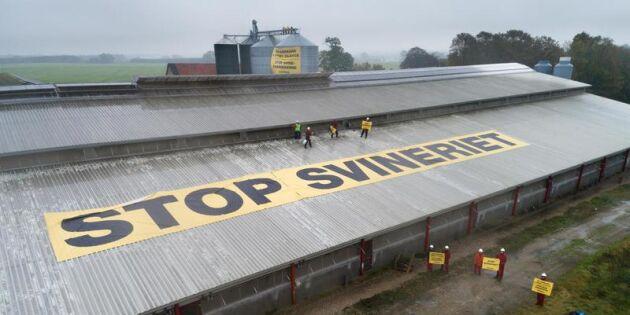 Greenpeace-kampanj upprör danska grisbönder